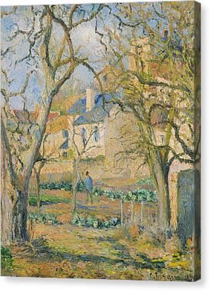 Vegetable Garden Canvas Print by Camille Pissarro