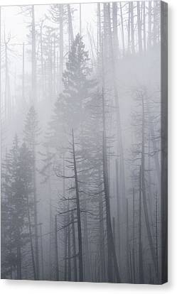 Canvas Print featuring the photograph Veiled In Mist by Dustin LeFevre