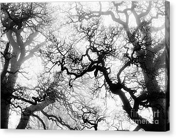 Veiled Tones Of Winter Canvas Print by Tim Gainey
