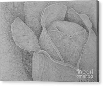 Veined Rose Canvas Print by Emily Young