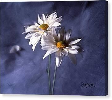 Velvet Daisies Canvas Print by Jack Eadon