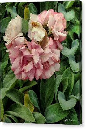 Velvet In Pink And Green Canvas Print by RC deWinter