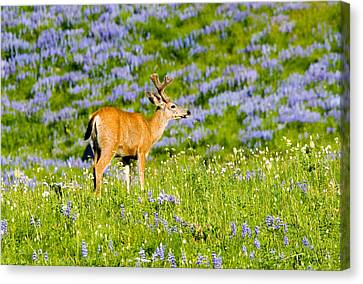 Velvet On Lupine Canvas Print by Mike  Dawson