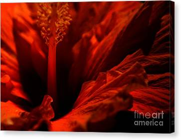 Velvet Seduction Canvas Print by Sheila Ping