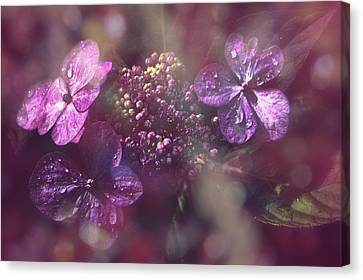 Velvet Touch Canvas Print by Nicole Frischlich