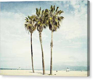 Venice Palms  Canvas Print by Bree Madden