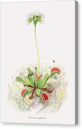 Venus Fly Trap  Canvas Print by Scott Bennett