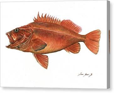 Vermilion Rockfish Canvas Print by Juan Bosco