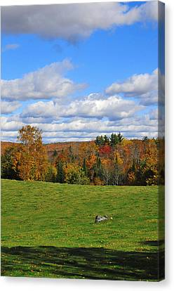 Vermont Field Canvas Print by Mandy Wiltse