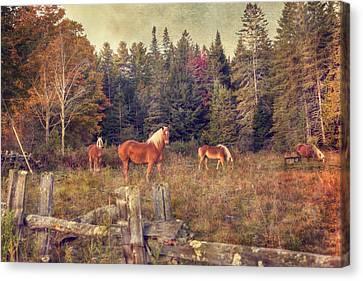 Vermont Horse Farm In Autumn Canvas Print by Joann Vitali