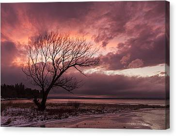 Vermont-sunset-silhouette-lake Champlain-tree Canvas Print by Andy Gimino