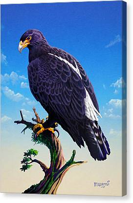 Verreaux's Eagle  Canvas Print