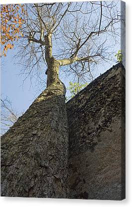 Canvas Print featuring the photograph Vertical by Alan Raasch