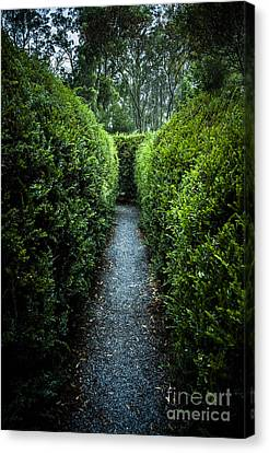 Vertical Outdoor Photograph Of A Garden Labyrinth Canvas Print by Jorgo Photography - Wall Art Gallery