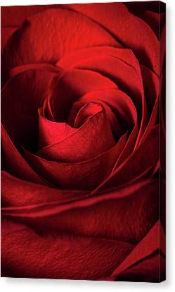 Vertical Rose Canvas Print