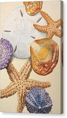 Vertical Starfish Canvas Print