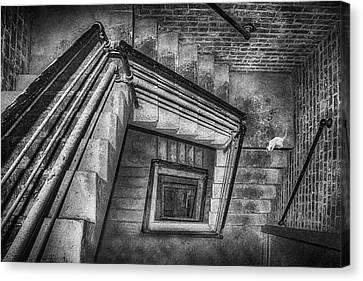Vertigo - Cat - Stairwell Canvas Print by Nikolyn McDonald