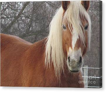 Very Ready For Close Up Canvas Print by Tina M Wenger
