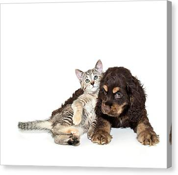 Cocker Spaniel Canvas Print - Very Sweet Kitten Lying On Puppy by StockImage