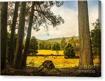 Vibrant Autumn Hillside Canvas Print by Jorgo Photography - Wall Art Gallery