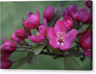 Canvas Print featuring the photograph Vibrant Blooms by Ann Bridges