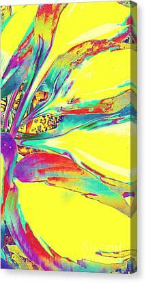 Vibrant Fascination  Canvas Print