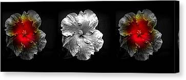 Vibrant Flower Series 3 Canvas Print by Jen White