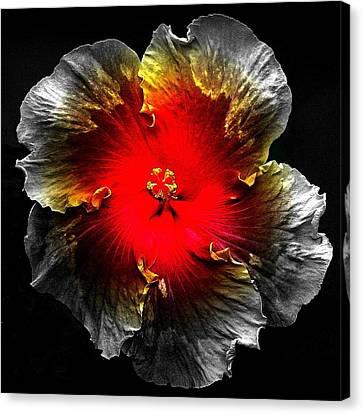 Vibrant Flower Series Canvas Print by Jen White