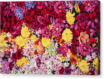 Vibrant Life Canvas Print by David Millenheft