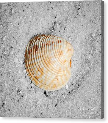 Vibrant Orange Ribbed Sea Shell In Fine Wet Sand Macro Square Format Color Splash Black And White Canvas Print by Shawn O'Brien