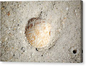 Vibrant Orange Ribbed Sea Shell In Fine Wet Sand Macro Watercolor Digital Art Canvas Print by Shawn O'Brien