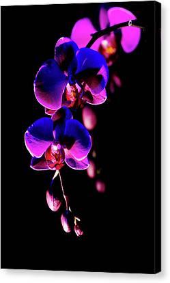 Vibrant Orchids Canvas Print by Ann Bridges