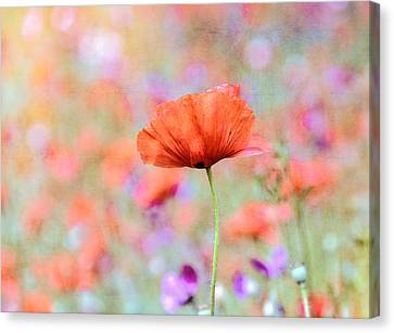 Canvas Print featuring the photograph Vibrant Poppies In A Field by Marion McCristall