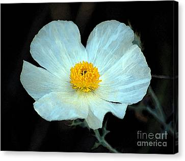 Vibrant White And Yellow Wildflower Watercolor Digital Art Canvas Print