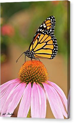 Monarch Butterfly On A Purple Coneflower Canvas Print