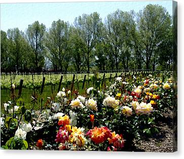 View From Bridlewood Vineyards Canvas Print by Kurt Van Wagner