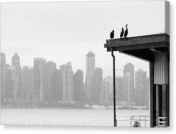 View From Londsdale Quay Canvas Print by Barbara  White