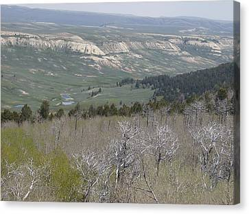 View From The Top Canvas Print by Susan Pedrini