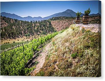 View Of The Vineyard. Winery In Casablanca, Chile. Canvas Print by Anna Soelberg