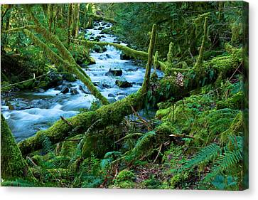 View Of A Stream Canvas Print by Jeff Swan