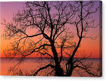 Gnarly Canvas Print - View Of Ocean Through Silhouetted Tree by Panoramic Images