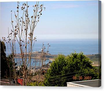 View Of Pillar Point Canvas Print by Carolyn Donnell