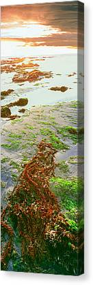 Roca Canvas Print - View Of Seaweed On The Beach, Las by Panoramic Images
