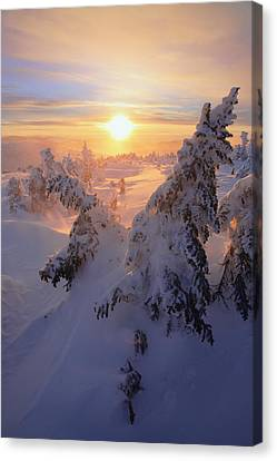 View Of Snow-covered Trees At Mont Canvas Print by Yves Marcoux