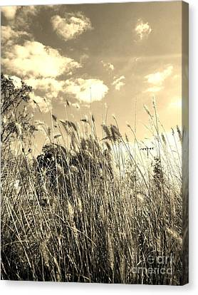 Southern Indiana Autumn Canvas Print - View Of The Field Mouse - Sepia by Scott D Van Osdol