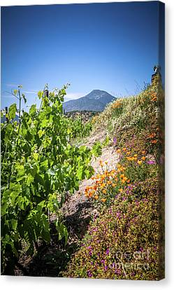 Vineyard View With Flowers, Winery In Casablanca, Chile Canvas Print by Anna Soelberg