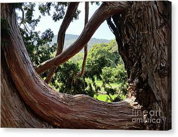 View Through The Tree Canvas Print