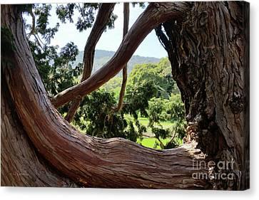 Canvas Print featuring the photograph View Through The Tree by Carol Lynn Coronios