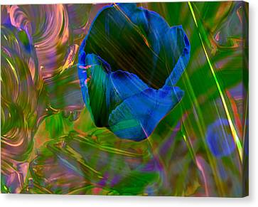 Viewing A Tulip Canvas Print
