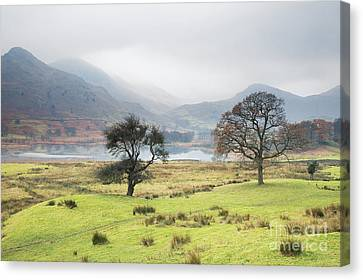 Foggy Day Canvas Print - Views Across Little Langdale by Tony Higginson